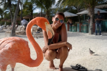 Flamingo in Aruba